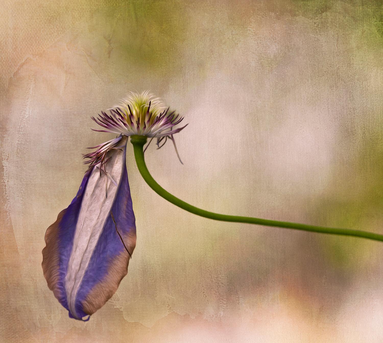The last petal